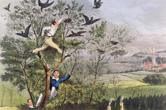 "Who-Whoop! I'Ve Done it - Raiding the Rookery from Nimrod's ""The Life of a Sportsman, 1874""--Giclee Print"