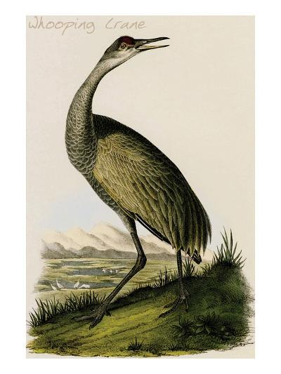 Whooping Crane-John James Audubon-Art Print