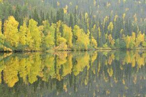 Woodland (Predominantly Spruce and Silver Birch)Oulanka River, Finland, September 2008 by Widstrand