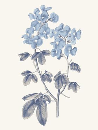 Blue Botanical III by Wild Apple Portfolio