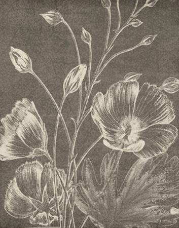 Botanical Beauty Chalk IX Crop by Wild Apple Portfolio