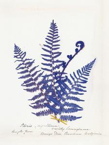 Botanical Fern IV Blue Light by Wild Apple Portfolio