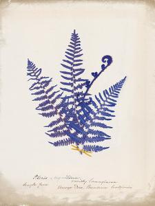 Botanical Fern IV Blue by Wild Apple Portfolio