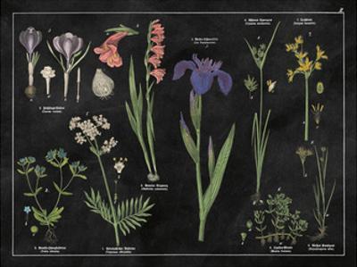 Botanical Floral Chart II Black and White by Wild Apple Portfolio