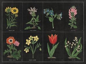Botanical on Black Chart I by Wild Apple Portfolio