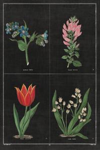 Botanical on Black Chart III by Wild Apple Portfolio