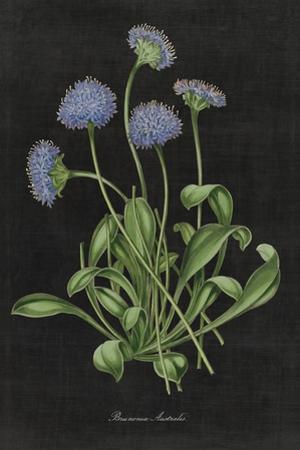 Botanical on Black Chart VII by Wild Apple Portfolio