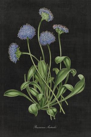 Botanical on Black Chart VII