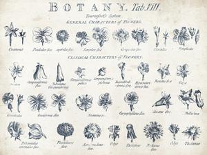 Botany Tab VIII Indigo and White by Wild Apple Portfolio