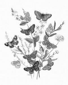 Butterfly Bouquet I Linen BW I by Wild Apple Portfolio