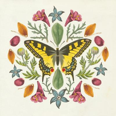 Butterfly Mandala III by Wild Apple Portfolio