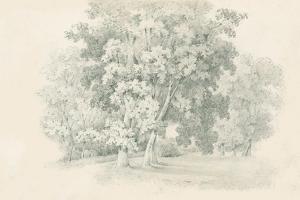 Edge of the Woods Sketch by Wild Apple Portfolio