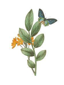 Greenery Butterflies I by Wild Apple Portfolio