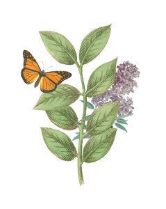 Greenery Butterflies III by Wild Apple Portfolio