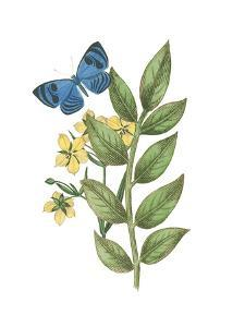 Greenery Butterflies IV by Wild Apple Portfolio