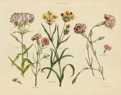 Herbal Botanical VIII by Wild Apple Portfolio