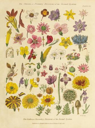 Herbal Botanical XI by Wild Apple Portfolio