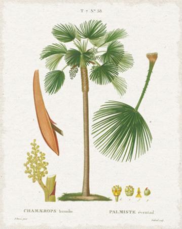Island Botanicals I by Wild Apple Portfolio