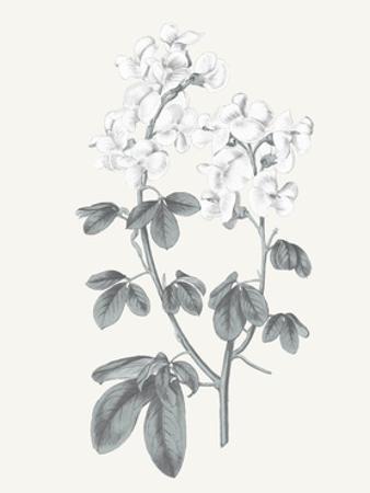 Neutral Botanical III by Wild Apple Portfolio