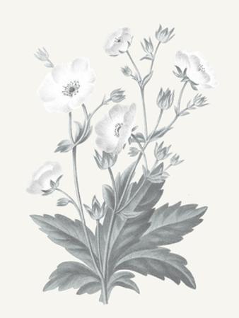 Neutral Botanical VI by Wild Apple Portfolio