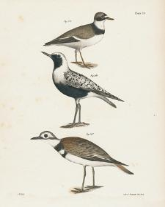 Shore Birds III by Wild Apple Portfolio