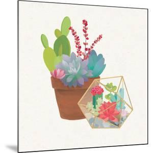 Succulent Garden II by Wild Apple Portfolio