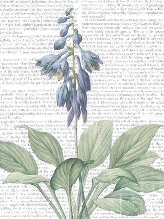 Summer Botanicals II