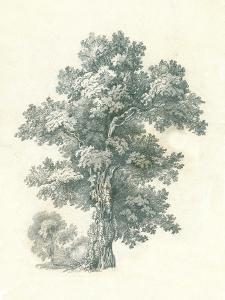 Tree Study I by Wild Apple Portfolio