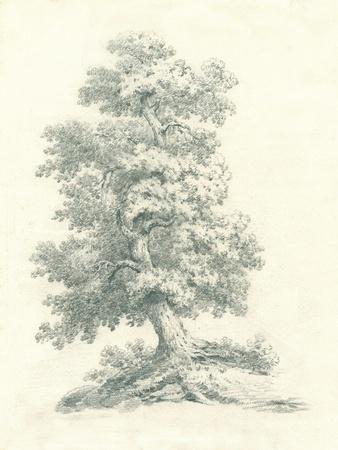 Tree Study II