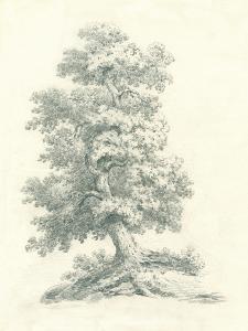 Tree Study II by Wild Apple Portfolio
