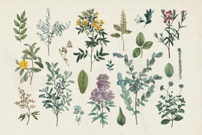 Victorian Garden IV by Wild Apple Portfolio
