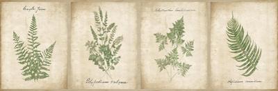 Vintage Ferns - 4 Image Panel by Wild Apple Portfolio
