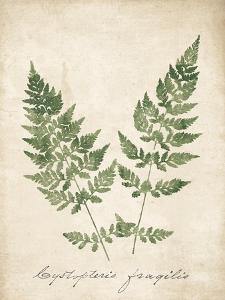 Vintage Ferns VII no Border by Wild Apple Portfolio