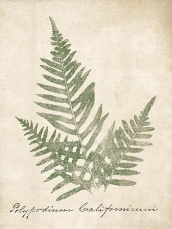 Vintage Ferns XI no Border by Wild Apple Portfolio