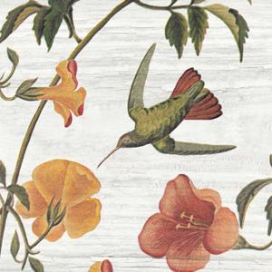 Vintage Hummingbird I by Wild Apple Portfolio