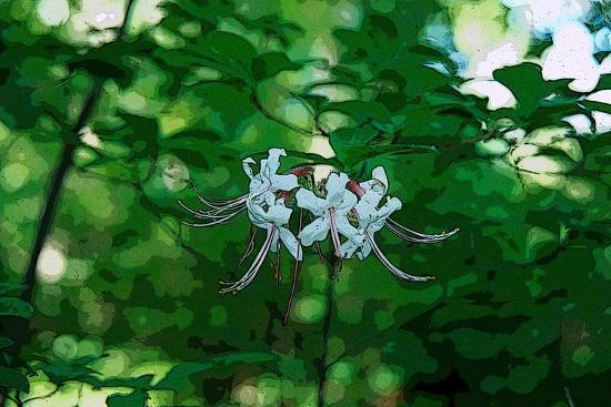 Wild Azaleas in the Mariners' Museum Park-Gregg Vicik-Giclee Print