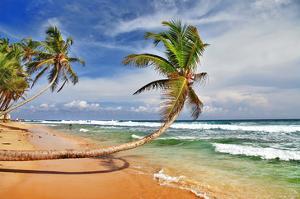 Wild Beautiful Beach Sri Lanka