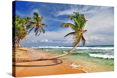 Wild Beautiful Beach Sri Lanka--Stretched Canvas Print