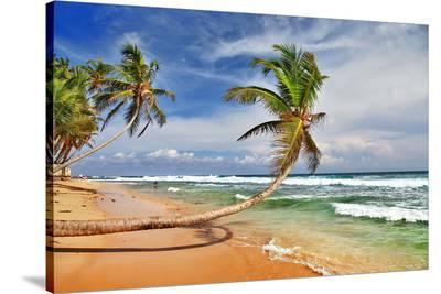 Wild Beautiful Beach Sri Lanka--Stretched Canvas Print