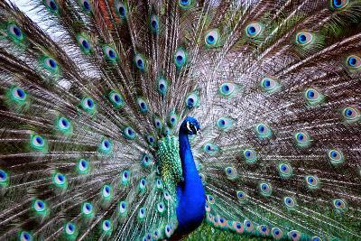 Wild Beauty II-Gail Peck-Photographic Print