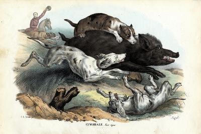 Wild Boar, 1863-79-Raimundo Petraroja-Giclee Print