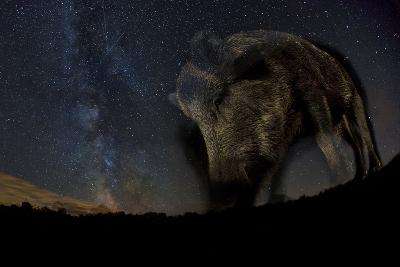 Wild Boar (Sus Scrofa) at Night with the Milky Way in the Background, Gyulaj, Tolna, Hungary-Bence Mate-Photographic Print