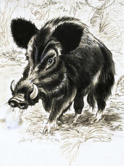 Wild Boar-English School-Giclee Print