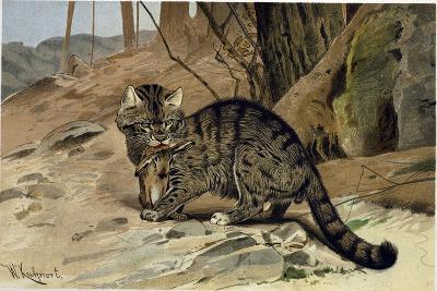 Wild Cat--Giclee Print