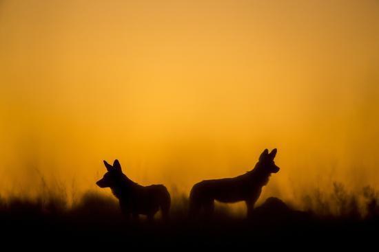Wild Dogs, Moremi Game Reserve, Botswana-Paul Souders-Photographic Print