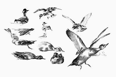 Wild Ducks, 1901-Felix Braquemond-Giclee Print