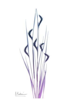 https://imgc.artprintimages.com/img/print/wild-flower_u-l-f7tzsk0.jpg?p=0