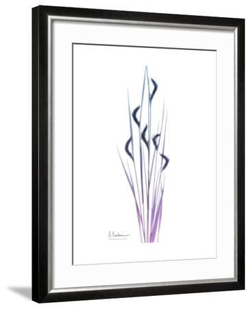 Wild flower-Albert Koetsier-Framed Art Print