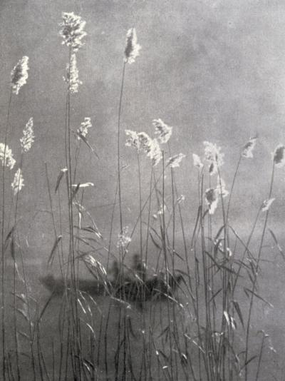 Wild Flowers Growing on Te Banks of a Pond--Photographic Print