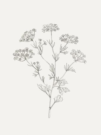 https://imgc.artprintimages.com/img/print/wild-foliage-sketch-iii_u-l-q1gwbmf0.jpg?artPerspective=n